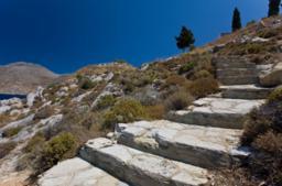 Wild Oregano in Greece